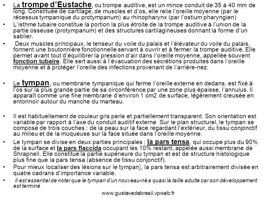 www.gustavedabresil.vpweb.fr La trompe dEustache, ou trompe auditive, est un mince conduit de 35 à 40 mm de long. Constituée de cartilage, de muscles