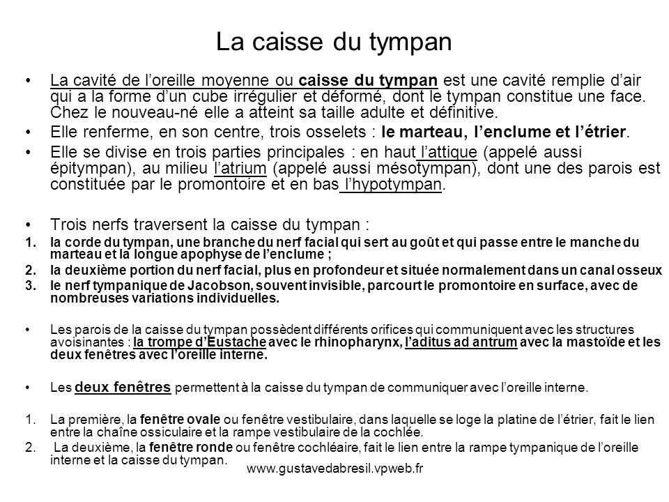www.gustavedabresil.vpweb.fr La caisse du tympan La cavité de loreille moyenne ou caisse du tympan est une cavité remplie dair qui a la forme dun cube