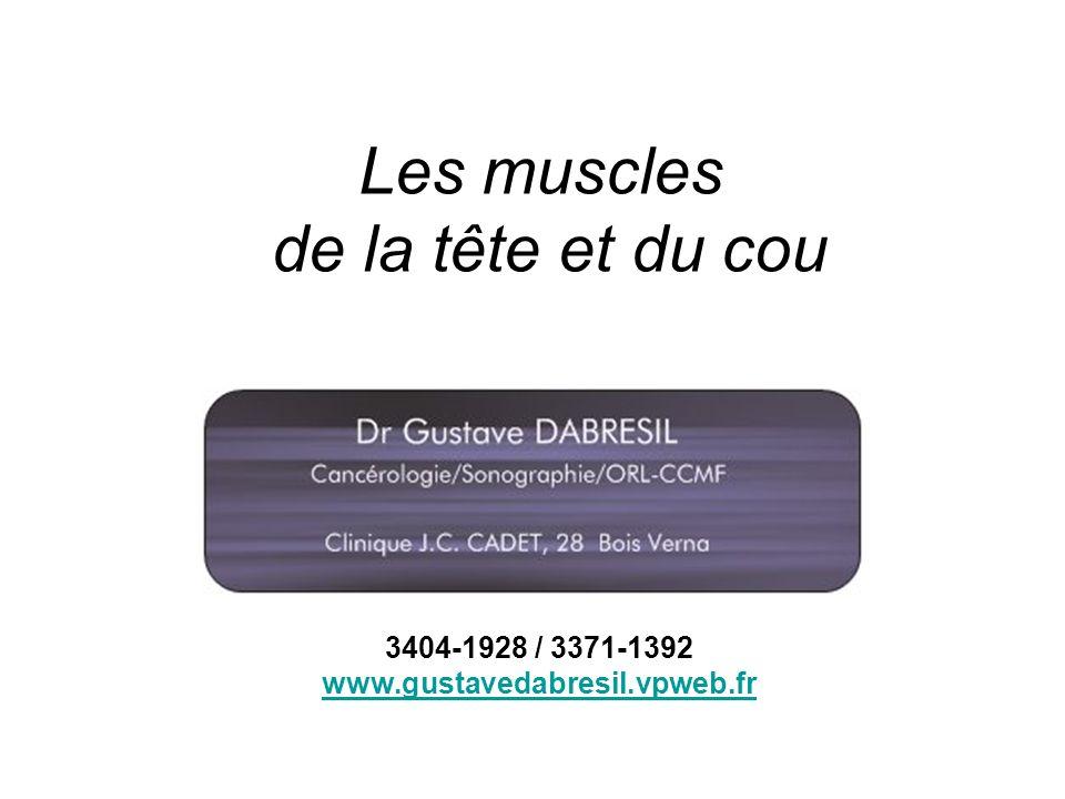 Les muscles de la tête et du cou 3404-1928 / 3371-1392 www.gustavedabresil.vpweb.fr
