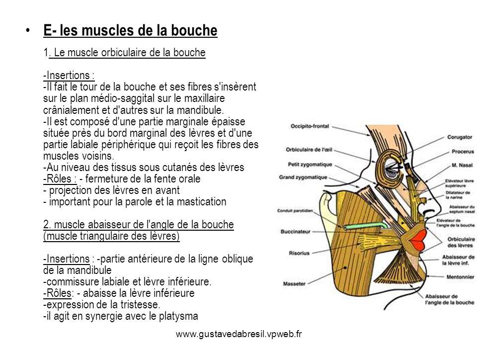 www.gustavedabresil.vpweb.fr E- les muscles de la bouche 1. Le muscle orbiculaire de la bouche -Insertions : -Il fait le tour de la bouche et ses fibr