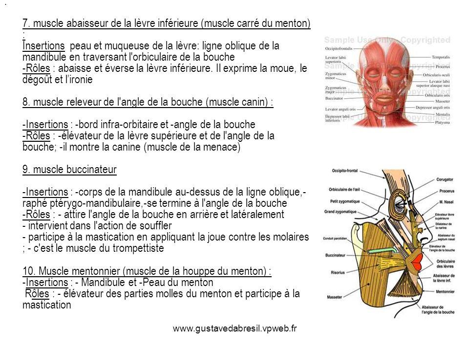 www.gustavedabresil.vpweb.fr 7. muscle abaisseur de la lèvre inférieure (muscle carré du menton) : Insertions peau et muqueuse de la lèvre: ligne obli