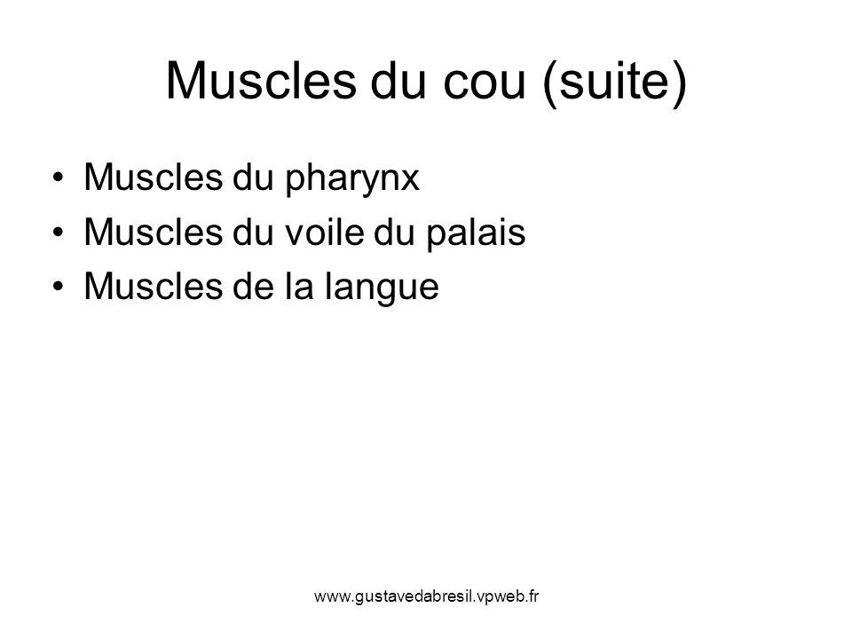 www.gustavedabresil.vpweb.fr Muscles du cou (suite) Muscles du pharynx Muscles du voile du palais Muscles de la langue