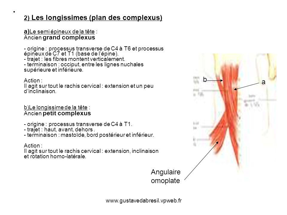 www.gustavedabresil.vpweb.fr 2) Les longissimes (plan des complexus) a) Le semi épineux de la tête : Ancien grand complexus - origine : processus tran