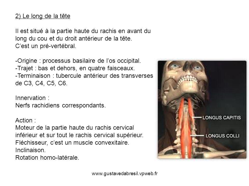 www.gustavedabresil.vpweb.fr 2) Le long de la tête Il est situé à la partie haute du rachis en avant du long du cou et du droit antérieur de la tête.