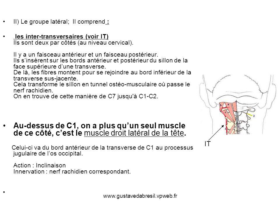 www.gustavedabresil.vpweb.fr II) Le groupe latéral; Il comprend : les inter-transversaires (voir IT) Ils sont deux par côtés (au niveau cervical). Il