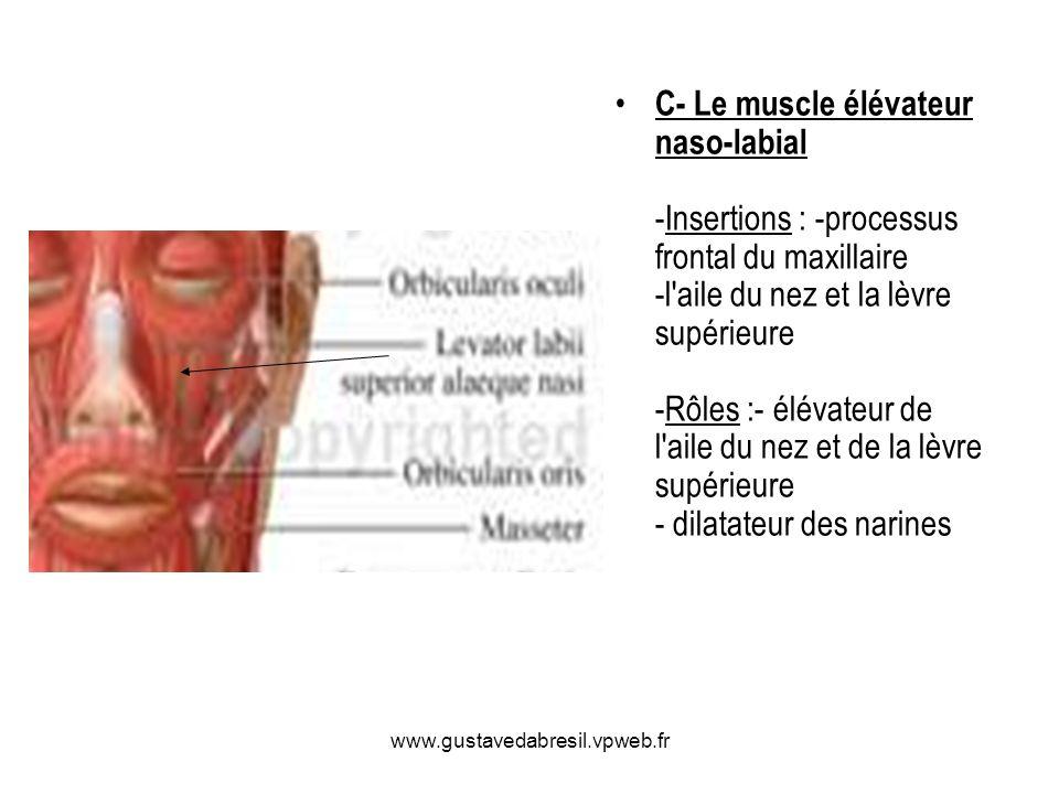 www.gustavedabresil.vpweb.fr C- Le muscle élévateur naso-labial -Insertions : -processus frontal du maxillaire -l'aile du nez et la lèvre supérieure -