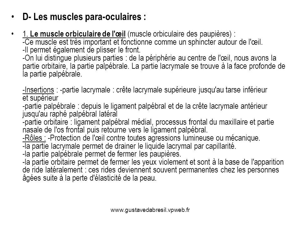 www.gustavedabresil.vpweb.fr D- Les muscles para-oculaires : 1. Le muscle orbiculaire de l'œil (muscle orbiculaire des paupières) : -Ce muscle est trè