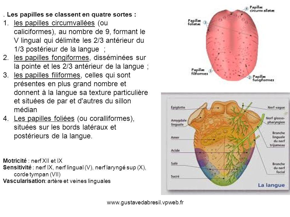 www.gustavedabresil.vpweb.fr.