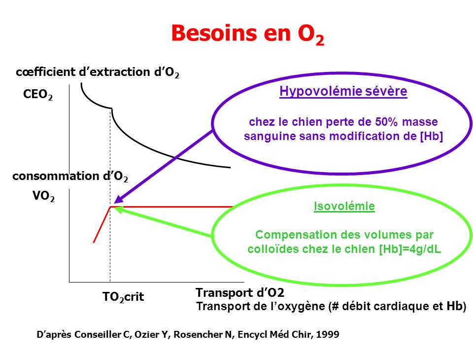 VO 2 TO 2 crit CEO 2 Transport dO2 consommation dO 2 Besoins en O 2 cœfficient dextraction dO 2 Hypovolémie sévère chez le chien perte de 50% masse sa