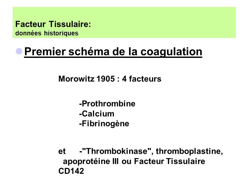 Facteur Tissulaire: données historiques Morowitz 1905 : 4 facteurs -Prothrombine -Calcium -Fibrinogène et -