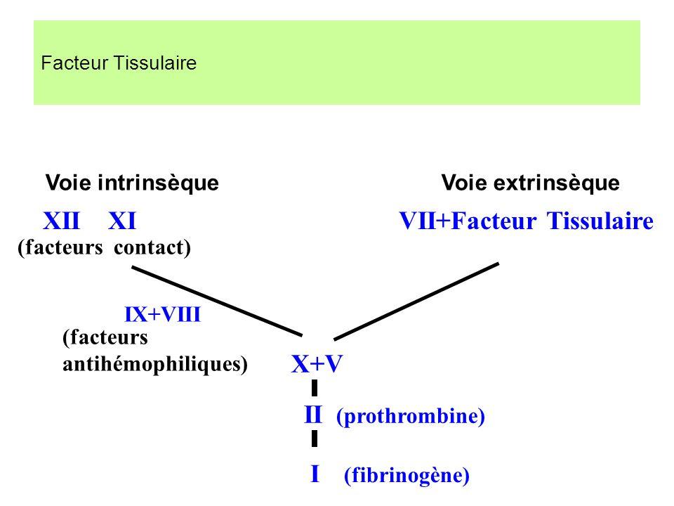Facteur Tissulaire Voie intrinsèque Voie extrinsèque X+V IX+VIII II (prothrombine) (facteurs contact) (facteurs antihémophiliques) XII XI VII+Facteur