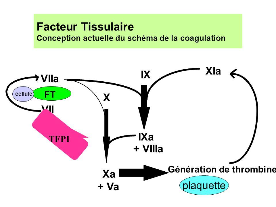 Facteur Tissulaire Conception actuelle du schéma de la coagulation IX IXa X VII VIIa FT Xa Génération de thrombine + Va + VIIIa XIa TFPI cellule plaqu