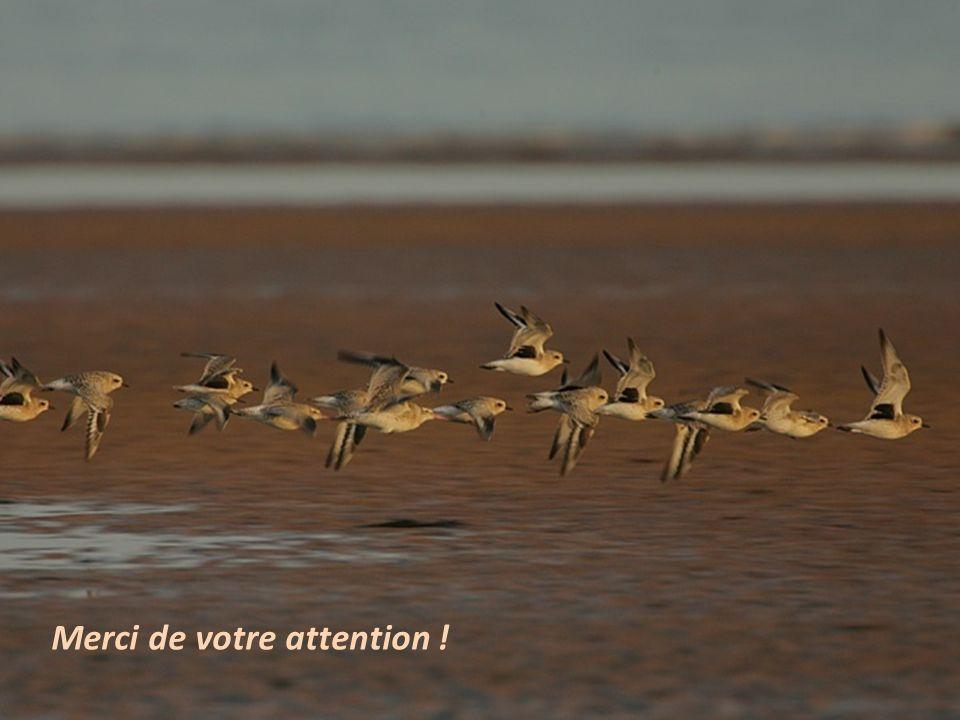 Séquence 4 – Dénombrer les oiseaux deau 13 Merci de votre attention !