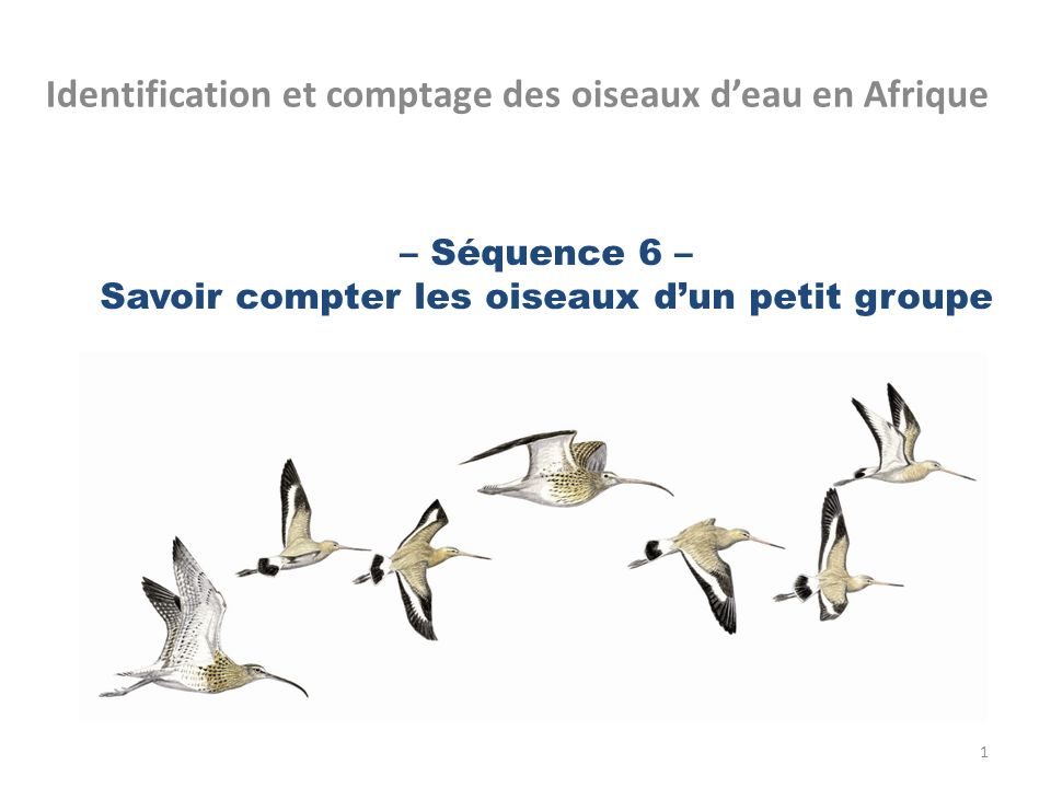 – Séquence 6 – Savoir compter les oiseaux dun petit groupe Identification et comptage des oiseaux deau en Afrique 1