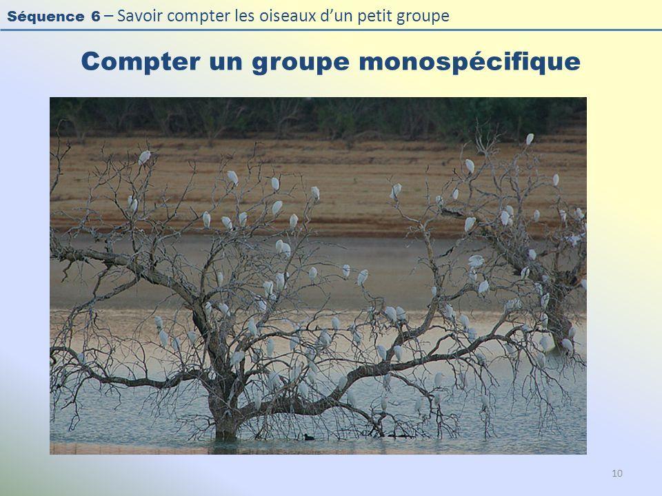 Séquence 6 – Savoir compter les oiseaux dun petit groupe Compter un groupe monospécifique 10