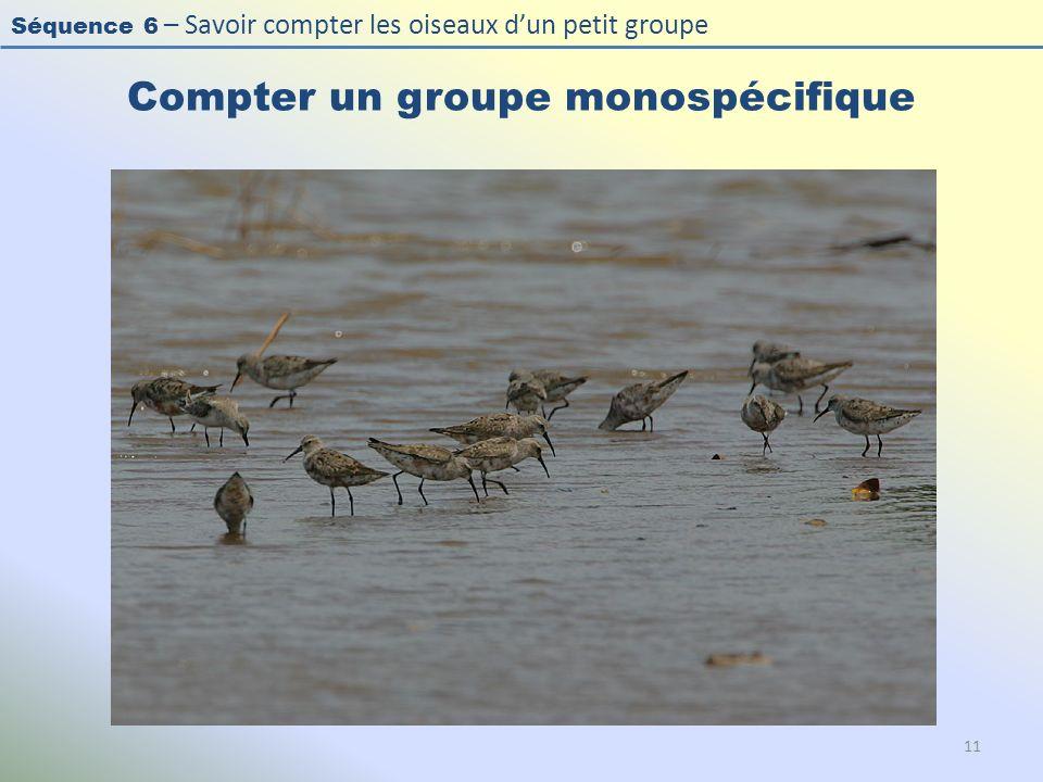 Séquence 6 – Savoir compter les oiseaux dun petit groupe Compter un groupe monospécifique 11