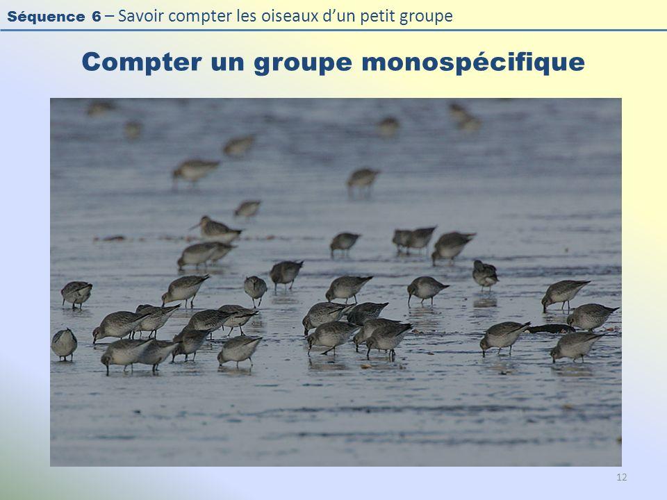 Séquence 6 – Savoir compter les oiseaux dun petit groupe Compter un groupe monospécifique 12