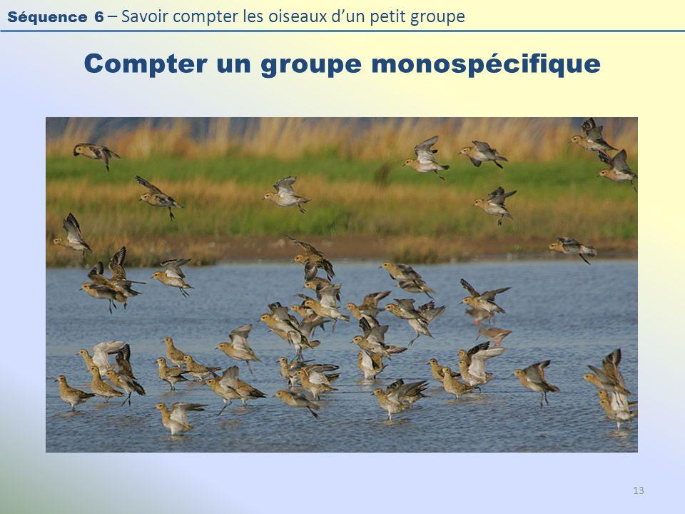 Séquence 6 – Savoir compter les oiseaux dun petit groupe Compter un groupe monospécifique 13