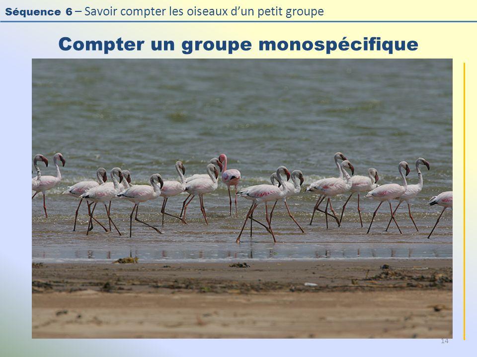 Séquence 6 – Savoir compter les oiseaux dun petit groupe Compter un groupe monospécifique 14