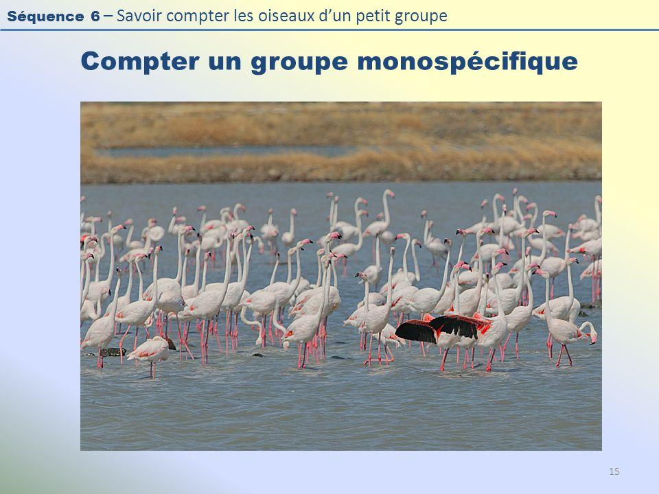 Séquence 6 – Savoir compter les oiseaux dun petit groupe Compter un groupe monospécifique 15