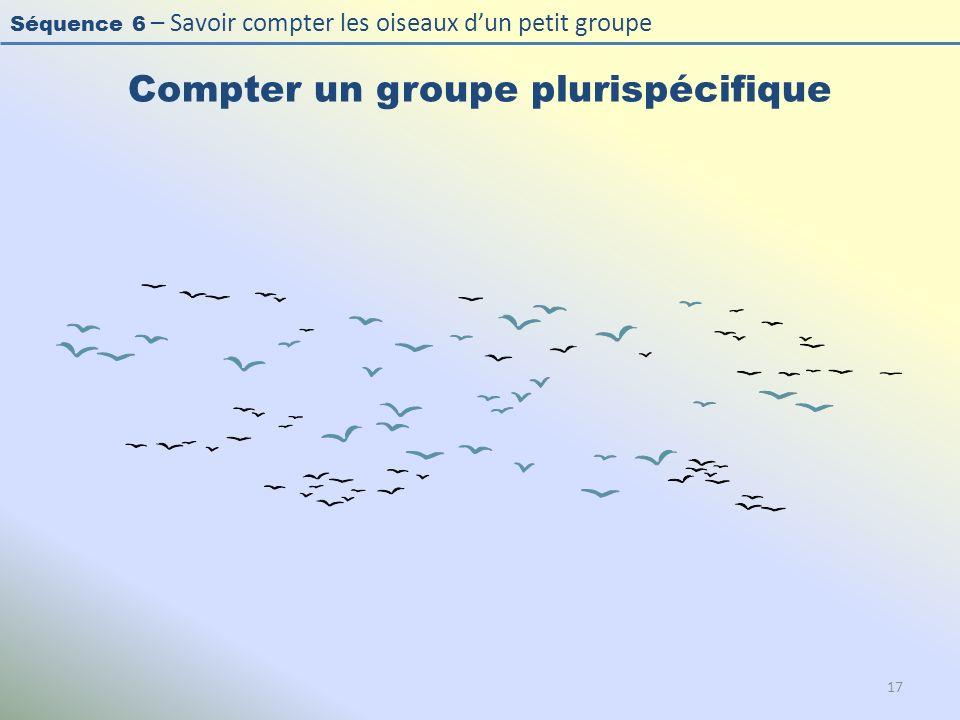 Séquence 6 – Savoir compter les oiseaux dun petit groupe Compter un groupe plurispécifique 17
