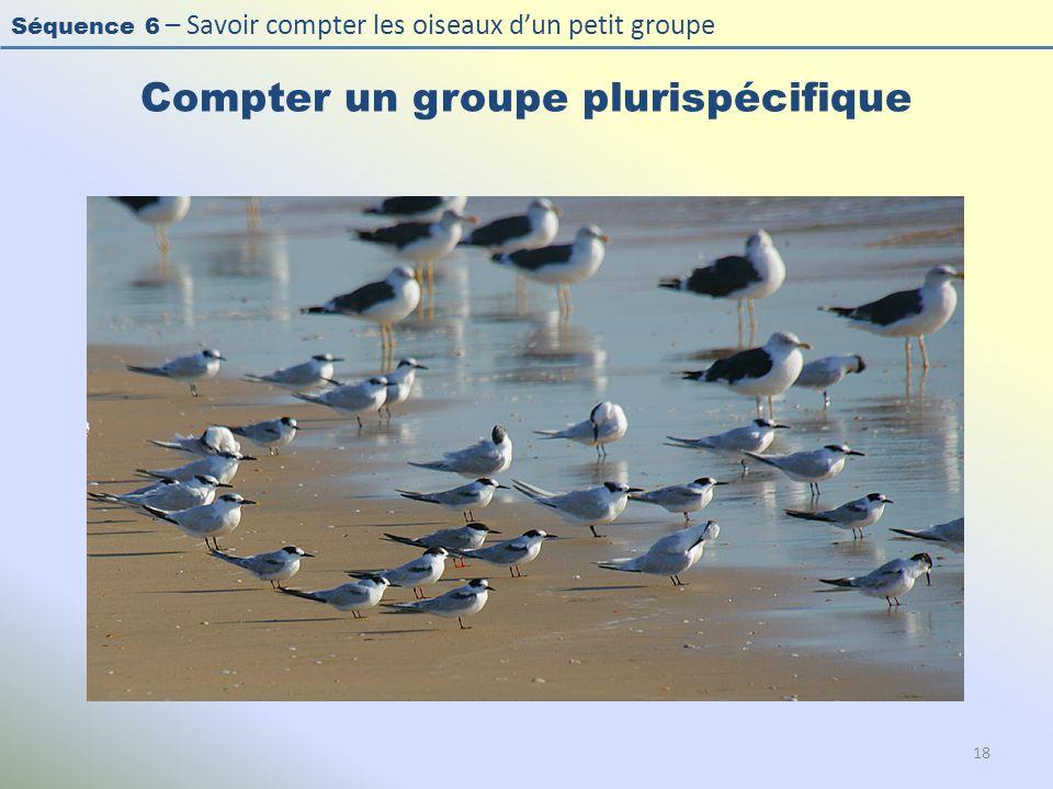 Séquence 6 – Savoir compter les oiseaux dun petit groupe Compter un groupe plurispécifique 18