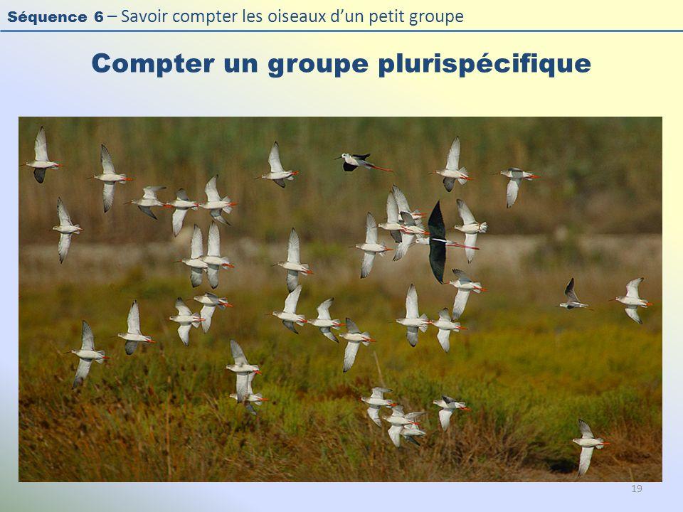 Séquence 6 – Savoir compter les oiseaux dun petit groupe Compter un groupe plurispécifique 19