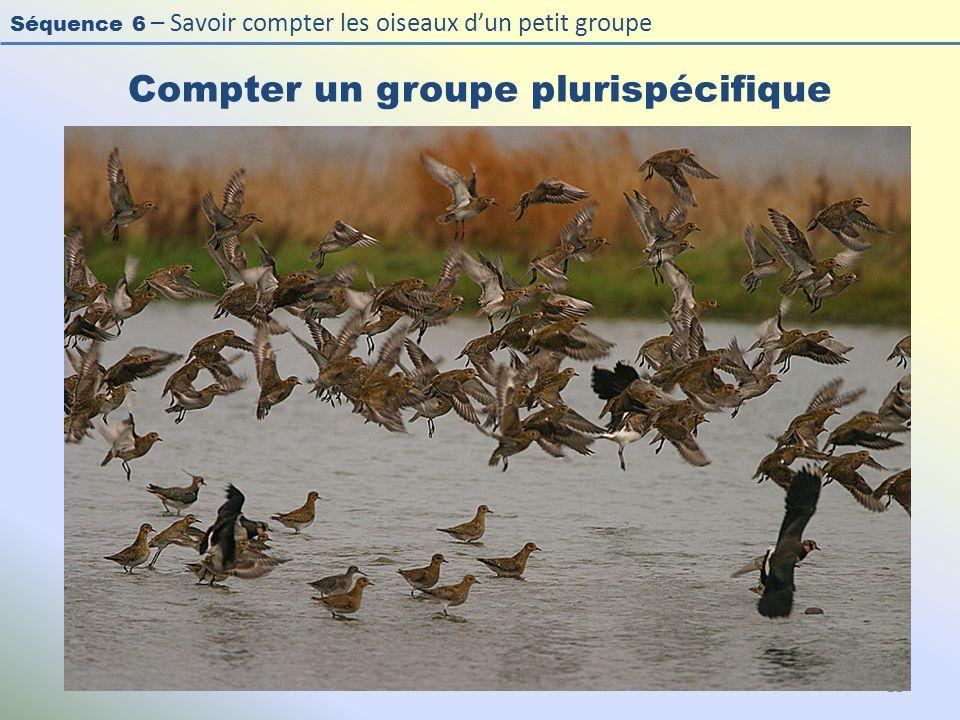 Séquence 6 – Savoir compter les oiseaux dun petit groupe Compter un groupe plurispécifique 21