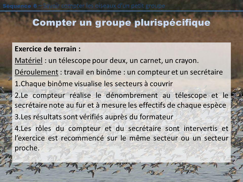 Séquence 6 – Savoir compter les oiseaux dun petit groupe Compter un groupe plurispécifique Exercice de terrain : Matériel : un télescope pour deux, un carnet, un crayon.