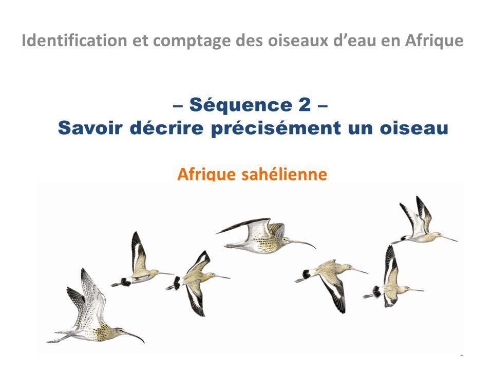 – Séquence 2 – Savoir décrire précisément un oiseau Afrique sahélienne Identification et comptage des oiseaux deau en Afrique 1
