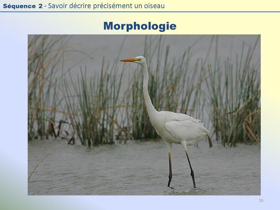 Séquence 2 - Savoir décrire précisément un oiseau Morphologie 16