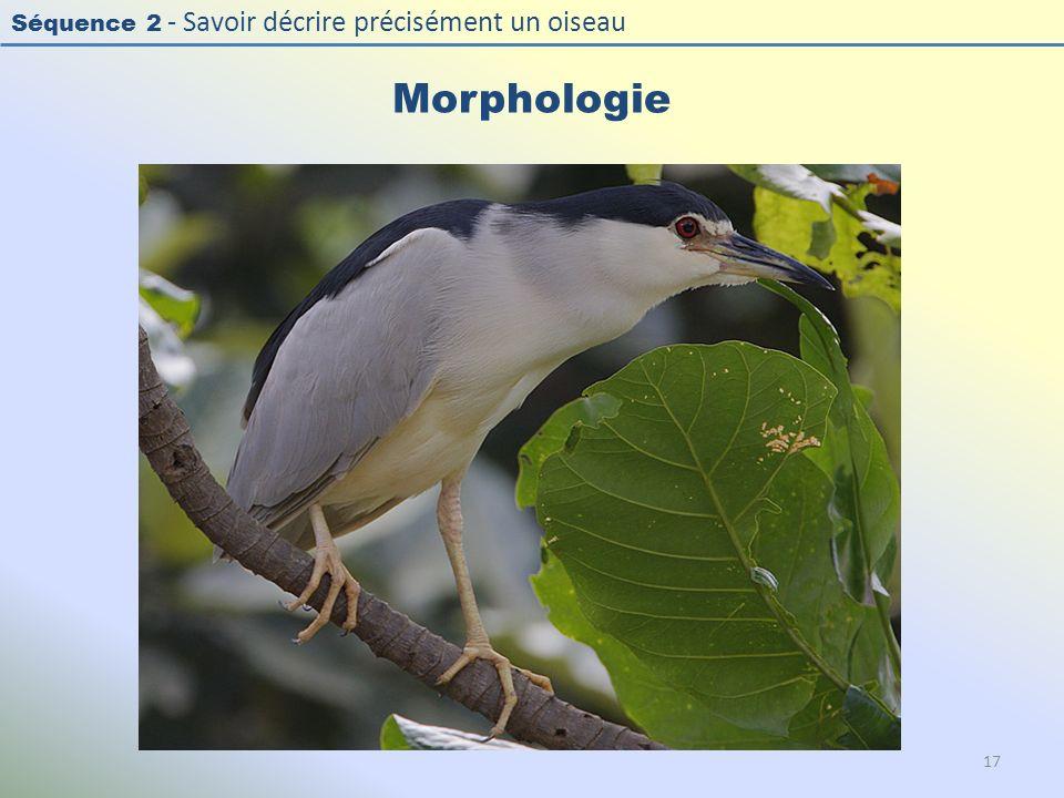 Séquence 2 - Savoir décrire précisément un oiseau Morphologie 17