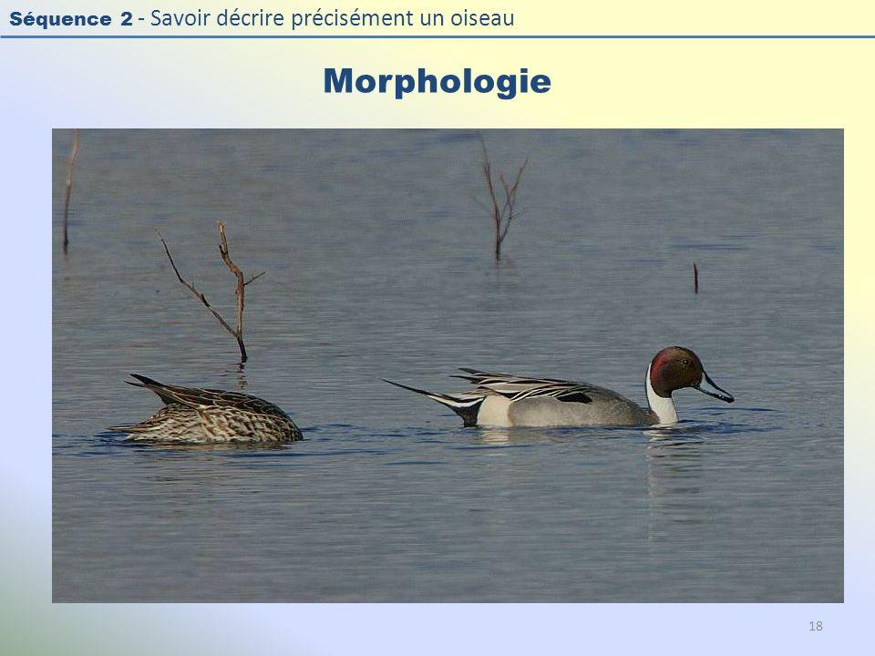 Séquence 2 - Savoir décrire précisément un oiseau Morphologie 18
