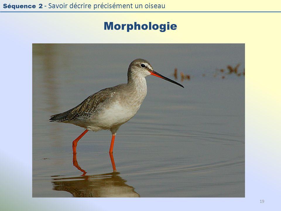 Séquence 2 - Savoir décrire précisément un oiseau Morphologie 19