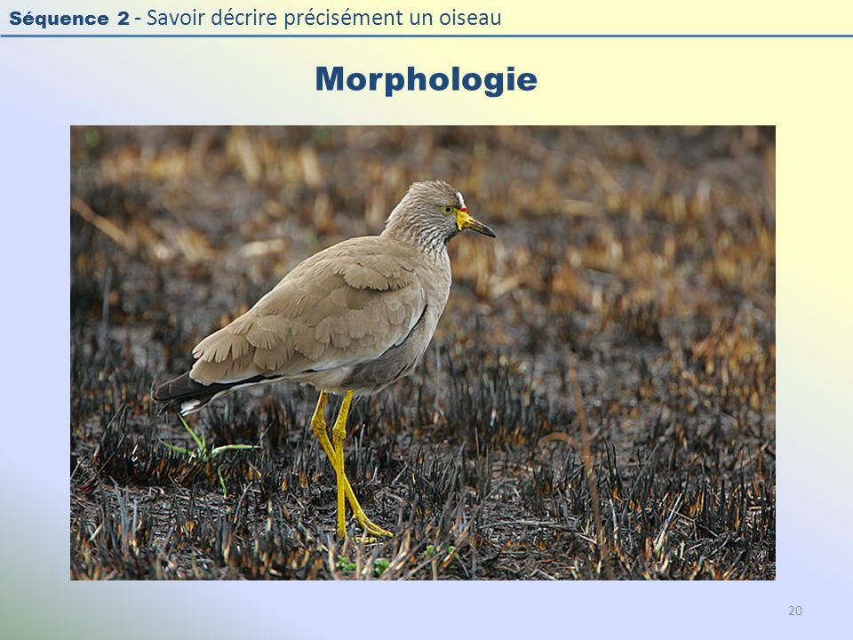 Séquence 2 - Savoir décrire précisément un oiseau Morphologie 20