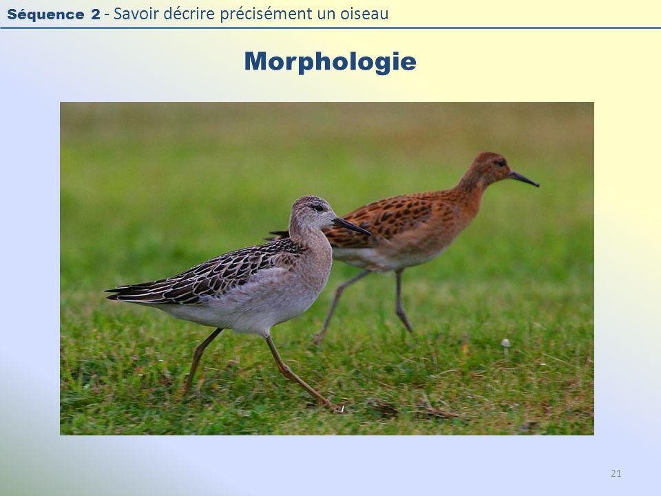 Séquence 2 - Savoir décrire précisément un oiseau Morphologie 21