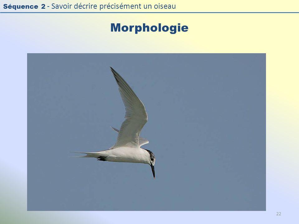 Séquence 2 - Savoir décrire précisément un oiseau Morphologie 22