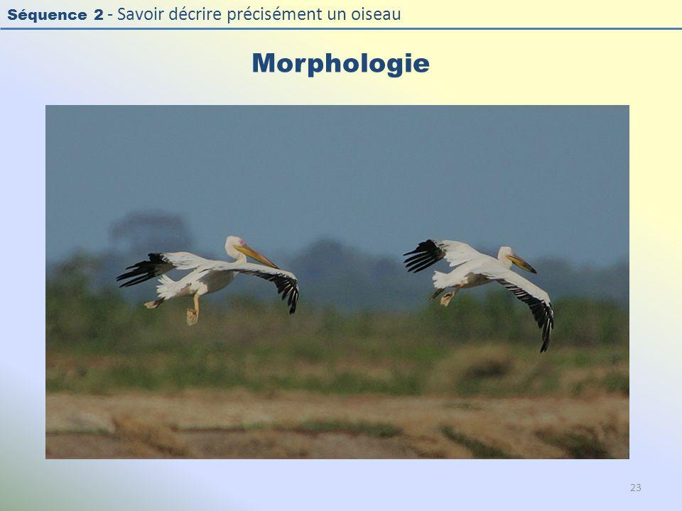Séquence 2 - Savoir décrire précisément un oiseau Morphologie 23