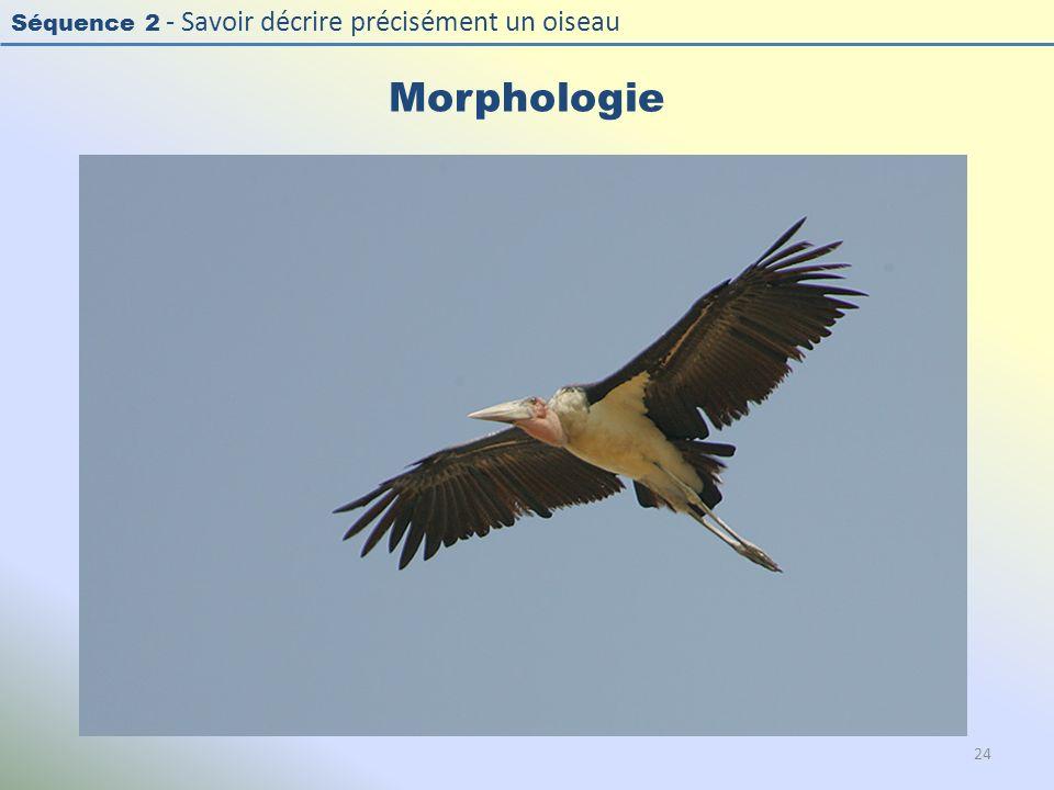 Séquence 2 - Savoir décrire précisément un oiseau Morphologie 24