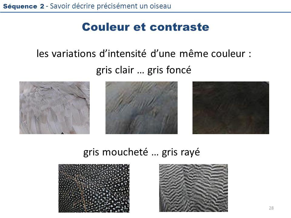 Séquence 2 - Savoir décrire précisément un oiseau Couleur et contraste les variations dintensité dune même couleur : gris clair … gris foncé 28 gris m