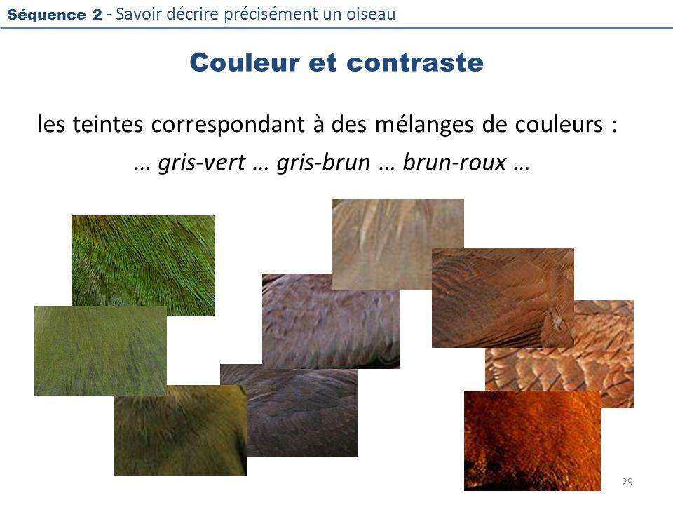 Séquence 2 - Savoir décrire précisément un oiseau Couleur et contraste les teintes correspondant à des mélanges de couleurs : … gris-vert … gris-brun