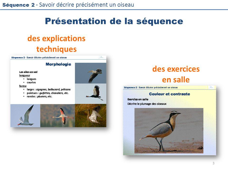 Séquence 2 - Savoir décrire précisément un oiseau Présentation de la séquence des explications techniques des exercices en salle 3