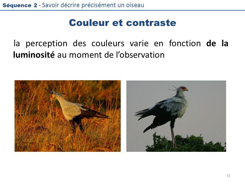 Séquence 2 - Savoir décrire précisément un oiseau Couleur et contraste la perception des couleurs varie en fonction de la luminosité au moment de lobs