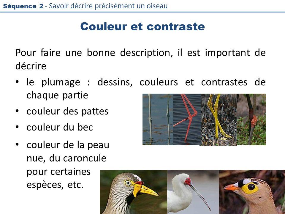 Séquence 2 - Savoir décrire précisément un oiseau Couleur et contraste Pour faire une bonne description, il est important de décrire le plumage : dess