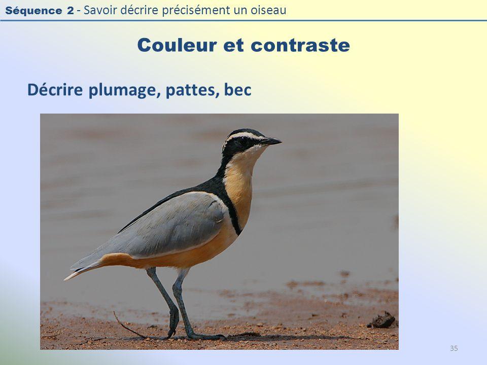 Séquence 2 - Savoir décrire précisément un oiseau Couleur et contraste 35 Décrire plumage, pattes, bec