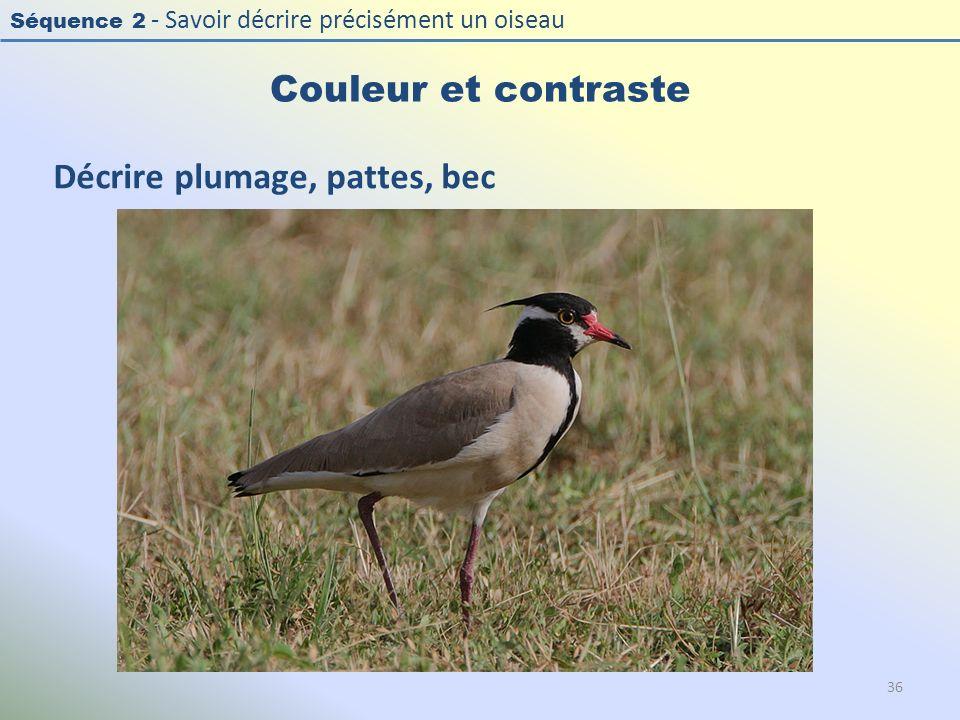 Séquence 2 - Savoir décrire précisément un oiseau Couleur et contraste 36 Décrire plumage, pattes, bec
