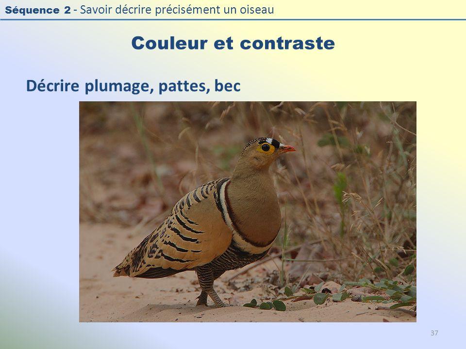 Séquence 2 - Savoir décrire précisément un oiseau Couleur et contraste Décrire plumage, pattes, bec 37