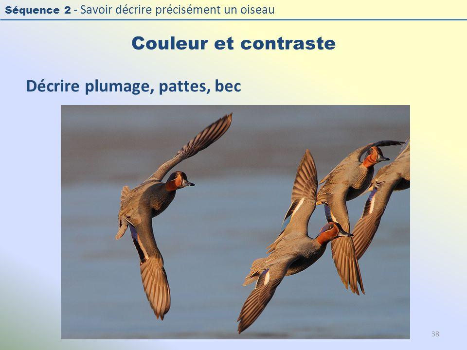 Séquence 2 - Savoir décrire précisément un oiseau Couleur et contraste 38 Décrire plumage, pattes, bec