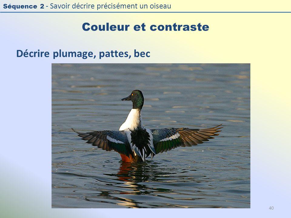 Séquence 2 - Savoir décrire précisément un oiseau Couleur et contraste Décrire plumage, pattes, bec 40
