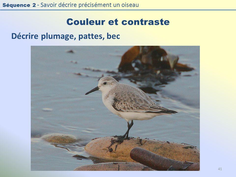 Séquence 2 - Savoir décrire précisément un oiseau Couleur et contraste 41 Décrire plumage, pattes, bec